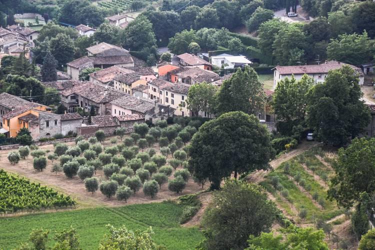 Ehler paesaggio colline olivi.jpg